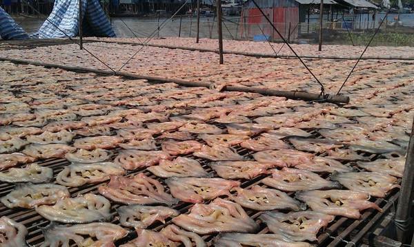 phơi khô cá lóc